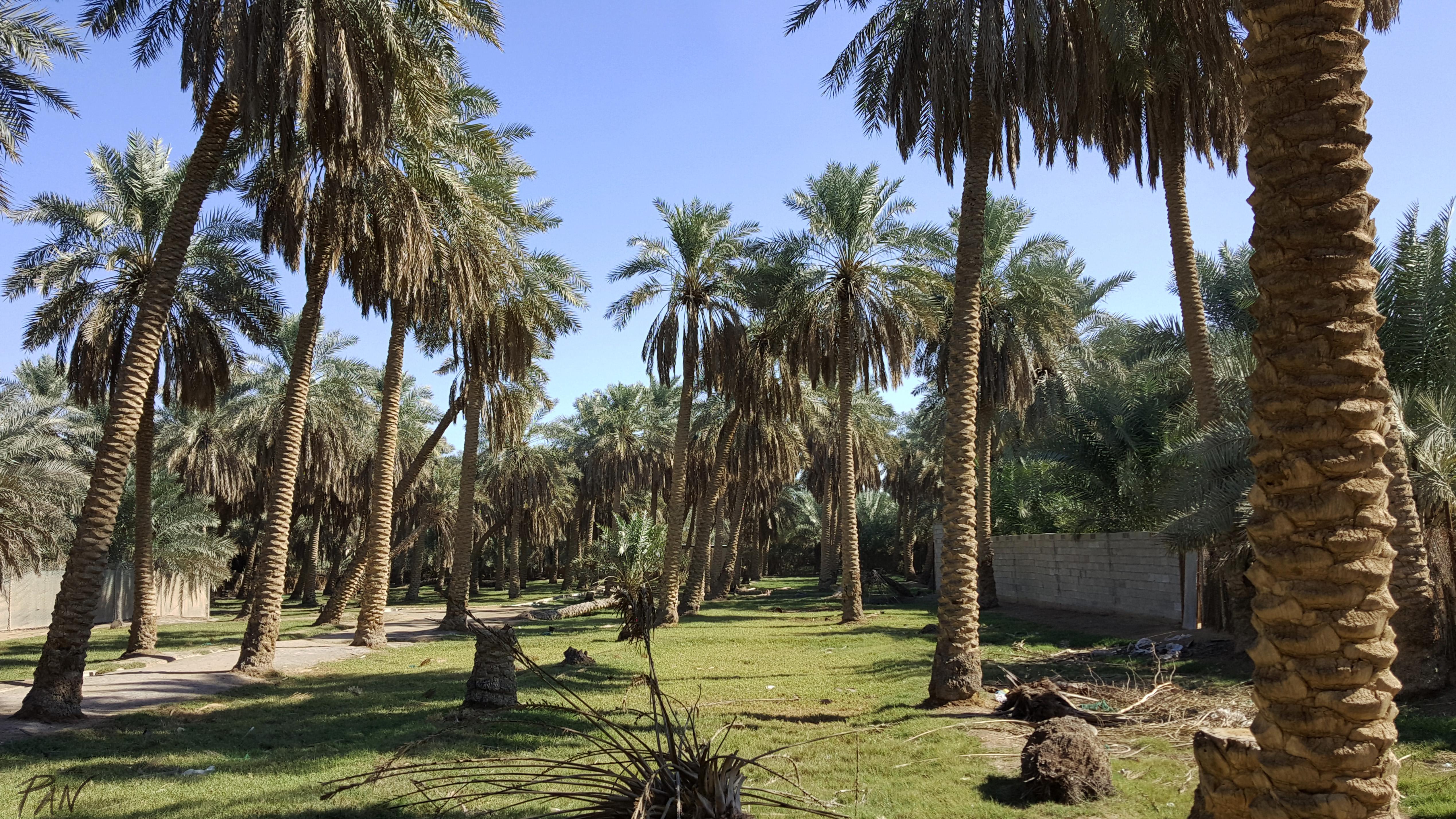 Al-Ahsa, Saudi Arabia, ph. PaN 2018